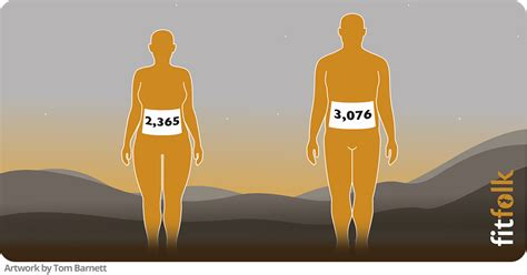 Per Day by What Are The Average Calories Burned Per Day By Men And Women