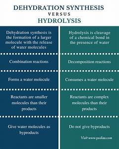 Difference Between Dehydration Synthesis And Hydrolysis