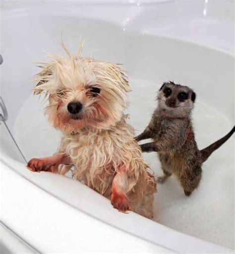 cutest picture  animals   bath