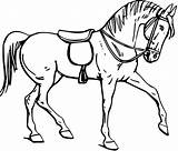 Outline Horse Saddle Drawing Horsemanship Horses Line Mount Coloring Pages Burden Getdrawings Pixcove Contour Mammal Creature Physical Sculpture Stone Animal sketch template