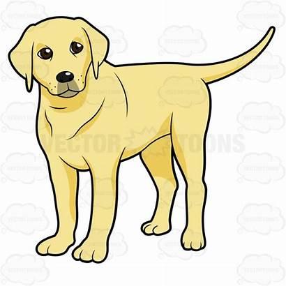 Labrador Lab Clipart Puppy Retriever Yellow Golden