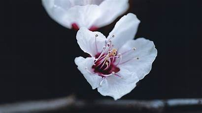 Petals Macro Flower Spring Tablet Laptop
