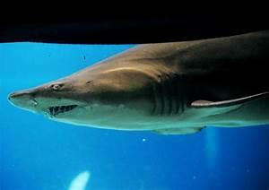 Coney Island has fin-tastic way to keep eye on sharks - NY ...