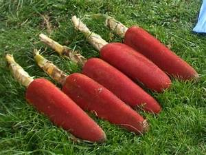 Health Benefits of Buah Merah | Buah Merah Mix Juice ...