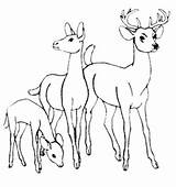 Deer Coloring Pages Whitetail Tailed Tail Printable Prints Animal Google Books Sheets Mammal Ruminant Getcolorings Leave Bestappsforkids Al Adult Popular sketch template
