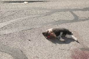 Dog Hit by Car On Road Dead