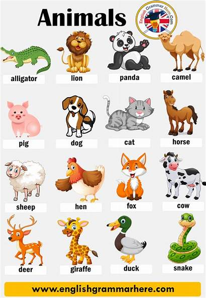Animals Names Animal English Vocabulary Type Words