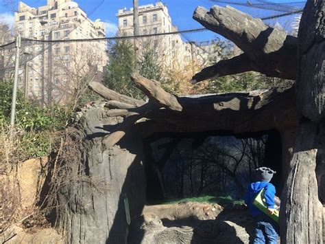 zoo york central park weekend gift ny grizzly bears