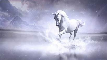 Horse Wallpapers Horses Stallion Cool