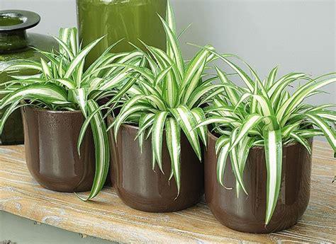 plantes verts d interieur jardinage23 plante d int 233 rieur juin 2013