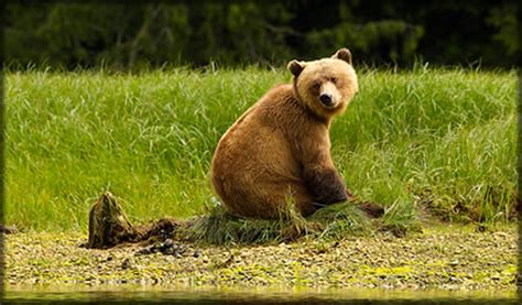 grizzly bear tours knight inlet bc