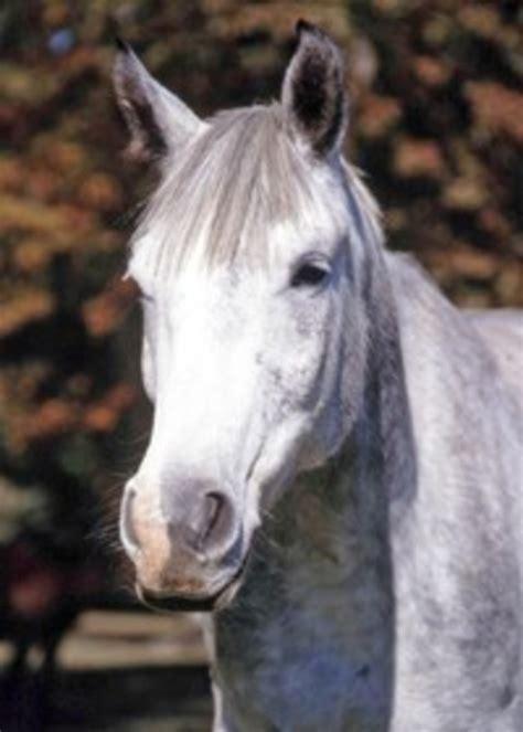 horse equine signs depression face generic mean hair behavior growth equusmagazine