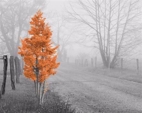 orange gray home decor wall art photo print foggy tree bw