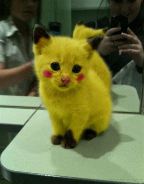 image de chat trop mignon photos de nos animaux