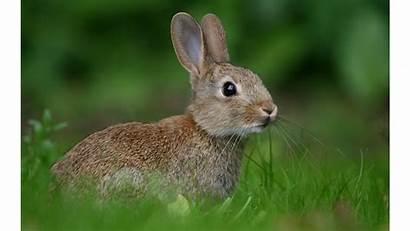 Bunny 4k Bunnies Rabbits Wallpapers Backgrounds Wallpapersafari