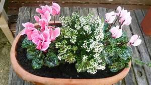 Fleur D Hiver Pour Jardinière : fleurs d 39 automne pour jardiniere images ~ Dailycaller-alerts.com Idées de Décoration