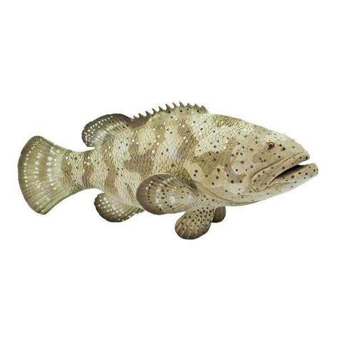 grouper goliath fish safari ltd creatures incredible animal cards replica educational toy dinosaur