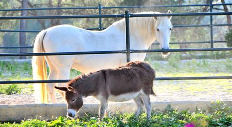 together horses donkeys donkey living mcbey farm