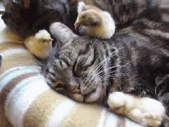 le canapé gif sur yvette oiseau petit photos de chats