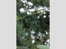 Lustige Spinne Bild lustichde
