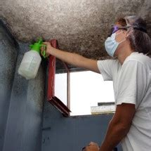 mold testing screening   home  business