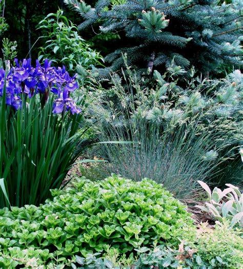 retardant plants 133 best images about deer rabbit resistant plants on pinterest gardens sun and the plant