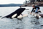 Free Willy 2: The Adventure Home (1995) - Quotes - IMDb