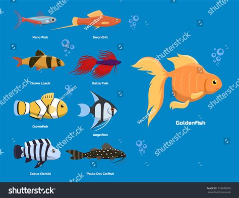 exotic tropical aquarium fish  colors stock
