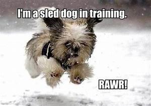 Sled Dog Quotes... Dog Sledding Quotes