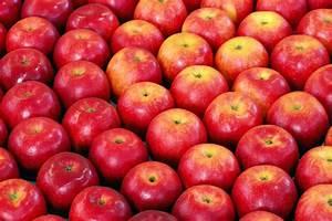 Eatsmart Fall Produce Guide