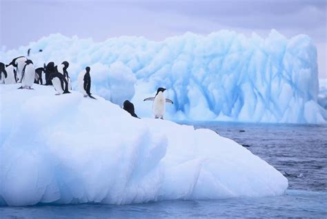 incredible facts  antarctica    cool