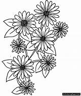 Daisies sketch template