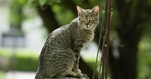 katzenkot im garten katzenschreck katzen vertreiben mit With französischer balkon mit katzen garten vertreiben