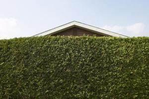 Schnell Wachsende Büsche : schnell wachsende b sche oder str ucher f r datenschutz ~ Whattoseeinmadrid.com Haus und Dekorationen