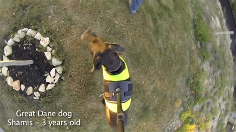 gopro  dog view mount testing micbergsma youtube