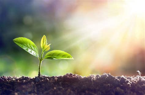 growth plant growing church growth trust