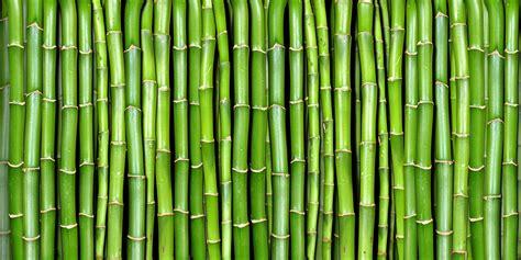 paper wall bamboo r11821 rebel walls us