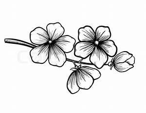 Dessin Fleur De Cerisier Japonais Noir Et Blanc : branch of a blossoming tree in graphic black white style ~ Melissatoandfro.com Idées de Décoration