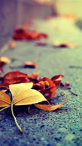 AUTUMN / FALL, IPHONE WALLPAPER BACKGROUND | IPHONE ...