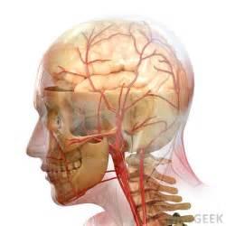Stroke Brain Blood Vessels