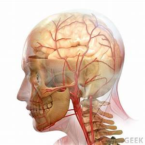 What Is A Brain Stem Stroke   With Pictures