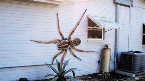 las  aranas mas grandes del mundo quedaras impresionado