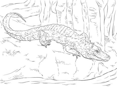 chinese alligator coloring page  printable coloring
