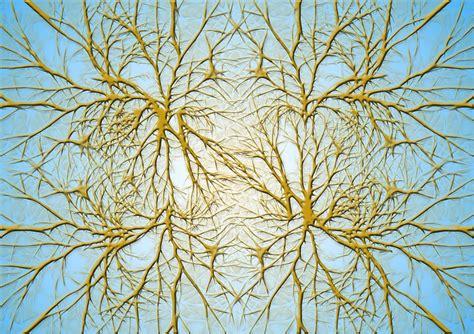 Biologia Delle Credenze La Biologia Delle Credenze Di Bruce Lipton