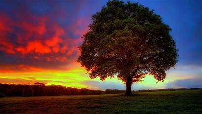 Tree 4k Trees Wallpapers Lonely Sunset Gorgeous