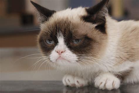 Photo Collection Grumpy Cat Hd Wallpaper