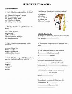 Mdeniz U0026 39 S Shop - Teaching Resources