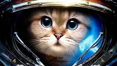 Cat Cool Wallpapers Background Desktop Space Wallpapersafari