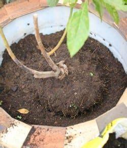 diy plastic barrel planter  projectsatobn