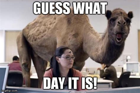 Hump Day Meme Dirty - funny wednesday memes memeologist com